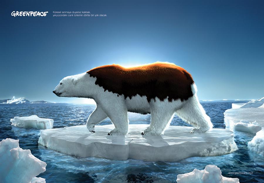北极熊正在掉色,北极正在消失